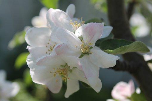 Flower, Plant, Nature, Sheet, Tree, Garden, Bud