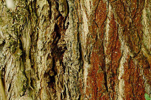 Tree, Wood, Bark, Structure, Nature, Wooden, Texture
