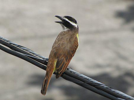 Birds, Wild Life, Nature, Animalia