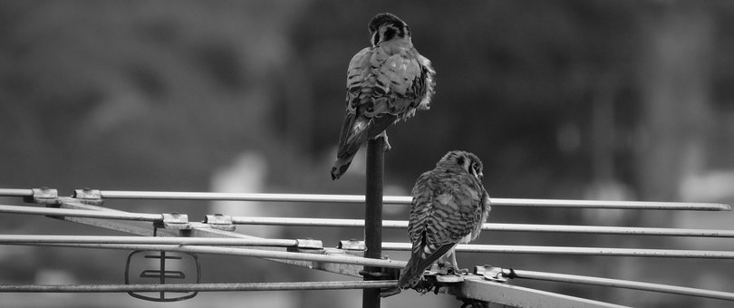 Birds, Nature, Wild Life, Animalia, Wild