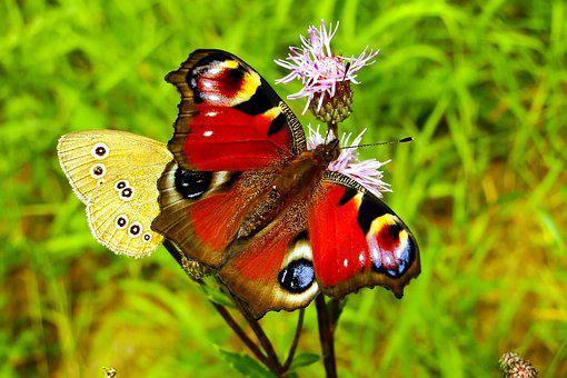 Butterfly Day, Insect, Nature, Animals, Summer