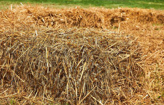 Straw, Straw Bales, Pile Of Straw, Close, Cereals