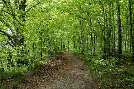 Deciduous Forest, Trees, Nature, Leaves