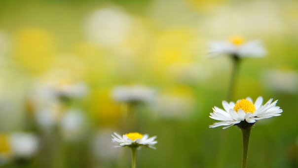 Nature, Summer, Flower, Plant, Grass, Growth, Leaf