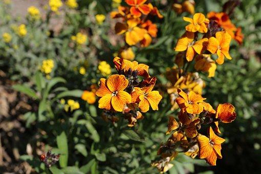 Flower, Plant, Nature, Garden, Leaf, Yellow Flowers