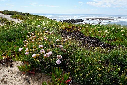 Flowers, Coast, Sea, Landscape, Spring, Portugal, Sines