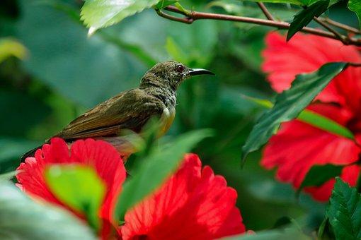 Nature, Flower, Outdoors, Garden, Leaf, Bird, Green