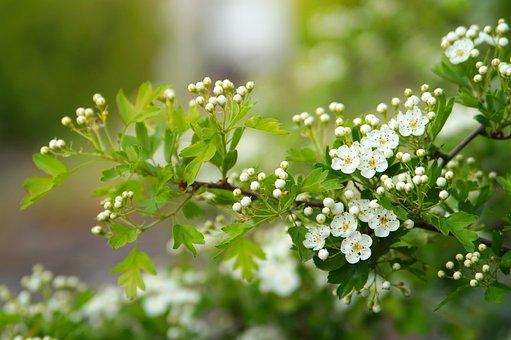 Nature, Plant, Flower, Tree, Season, Leaf, Growth