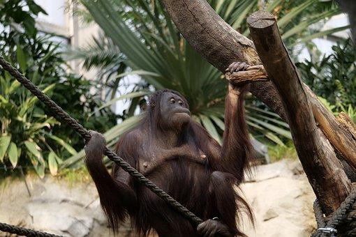 Tree, Tropical, Jungle, Monkey, Wood, Mammal