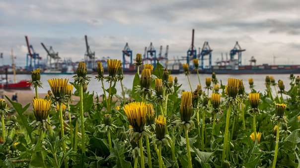 Nature, Flower, Elbe, Hamburg, Spring, Clouds, Color
