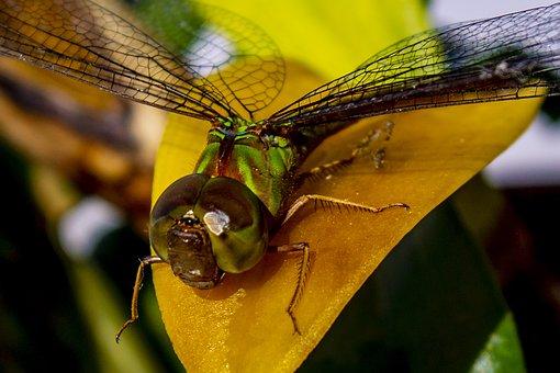 Insect, Nature, Invertebrates, Animalia