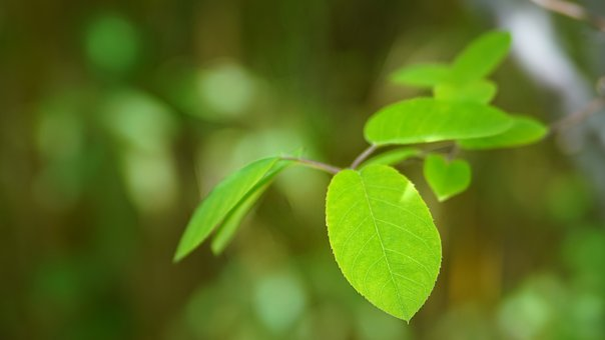 Leaf, Plant, Nature, Growth, Environment, Tree, Fresh