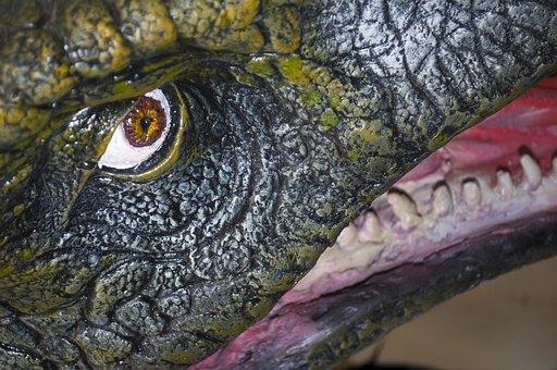 Nature, Animal, Reptile, Wildlife, Water, Wood