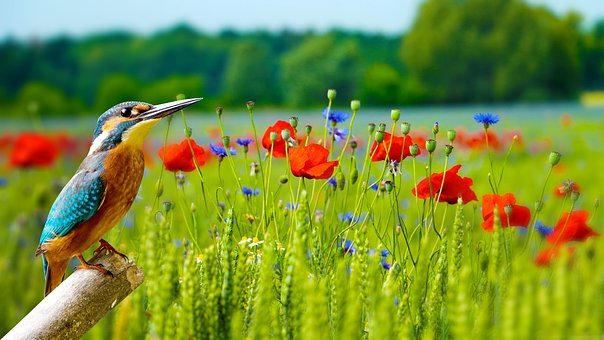 Wallpaper, Nature, Outdoors, Grass, Wildlife, Flower