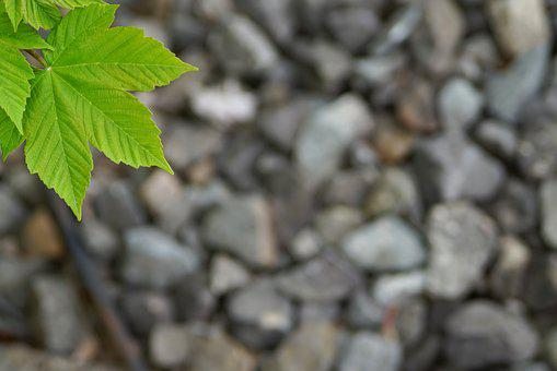 Nature, Background, Pattern, Texture, Close, Plant