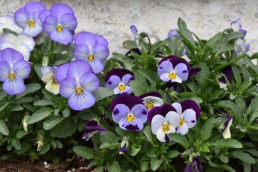 Flower, Leaf, Nature, Plant, Garden, Thoughts