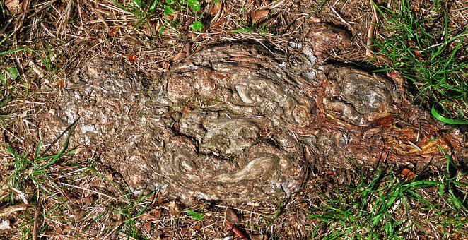 Root, Wood, Structure, Ground, Earth, Grass, Grain