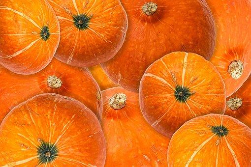 Pumpkin, Halloween, Fall, Thanksgiving, Autumn