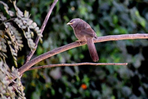 Nature, Bird, Wildlife, Tree, Outdoors, Wing, Wood