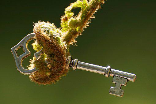 Fern, Unroll, Key, Decipher, Young Fern, Forest, Nature