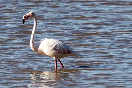 Spain, Andalucia, Doñana Park, Water, Bird, Wildlife
