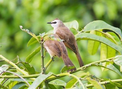 Nature, Bird, Wildlife, Tree, Outdoors, Animal, Little