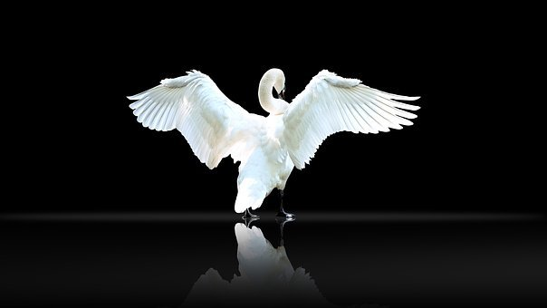 Wallpaper, Bird, Wildlife, Wing, Feather, Animal