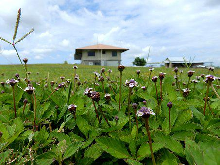 Flora, Nature, Outdoors, Flower, Agriculture, Farmhouse