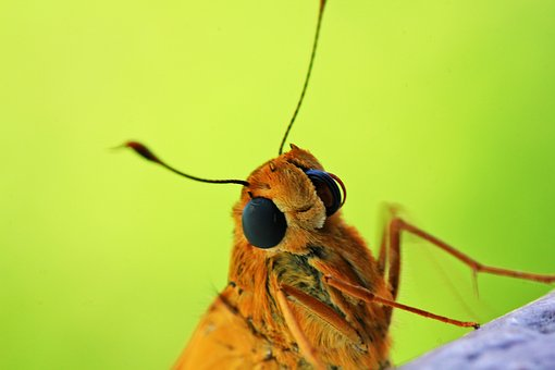 Insect, Nature, Animal, Fly, Antenna, Animal World