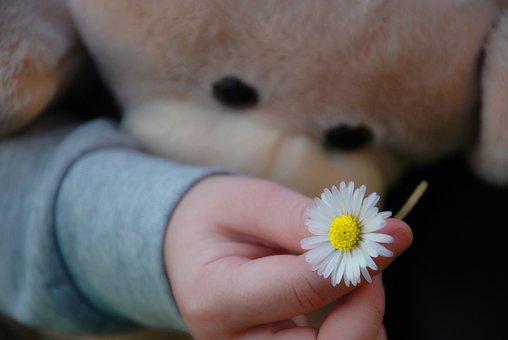 People, Hand, Flower, Pen, Kids, Bear, Daisy, Plush