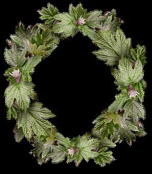 Leaves, Wreath, Frame, Border