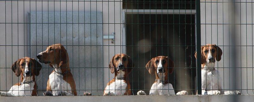 Dog, Mammal, Canine, Pack