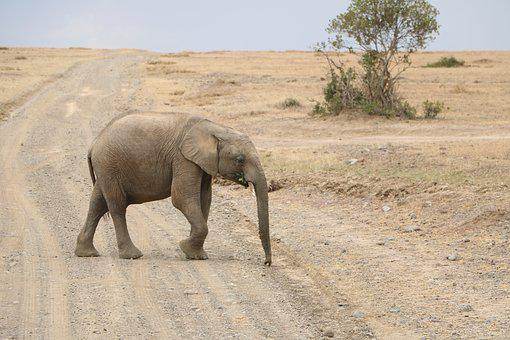 Desert, Safari, Travel, Sand, Dry, Elephant, Mammal