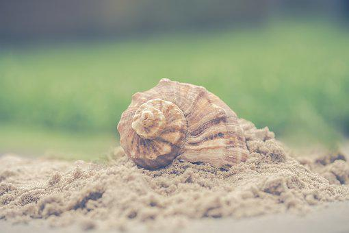 Shell, Nature, Sand, Exoskeleton, Summer