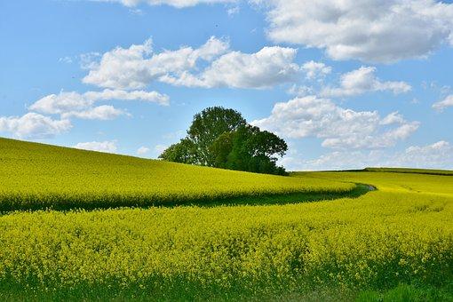 Agriculture, Field, Landscape, Panorama, Oilseed Rape