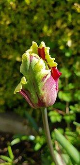 Nature, Flower, Flora, Garden, Leaf
