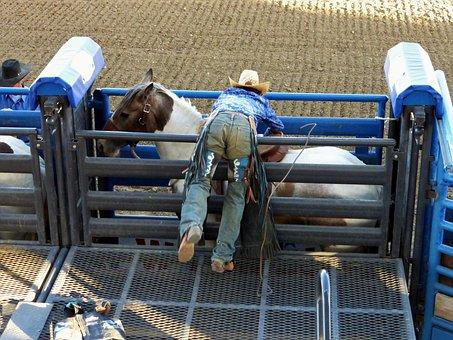 America, Cody, Rodeo, Horses, Saddle