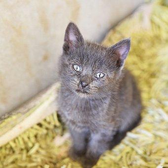 Mammal, Cat, Animal, Cute, Pet, Fur, Kitten, Domestic