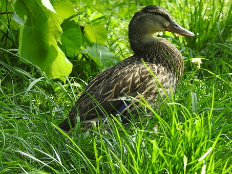 Nature, Birds, Lawn, At The Court Of, Animals, Beak
