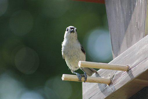 Outdoors, Wildlife, Nature, Bird, Animal