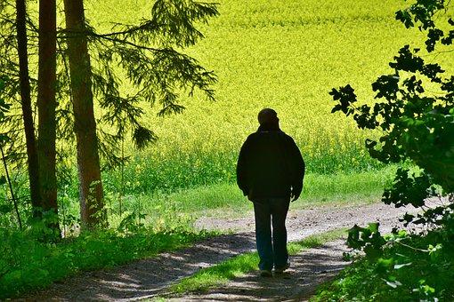 Senior, Man, Oilseed Rape, Field, Flower, Harvest