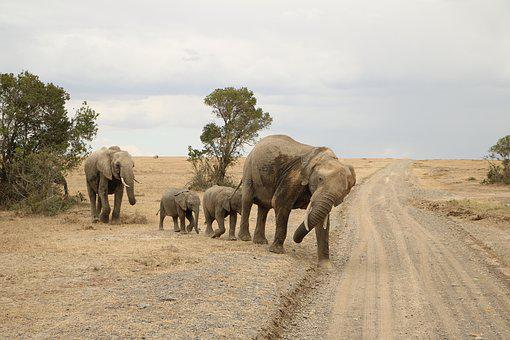 Nature, Safari, Elephant, Travel, Wildlife, Mammal