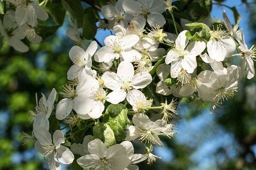 Flower, Nature, Plant, Branch, Tree, Garden, Season