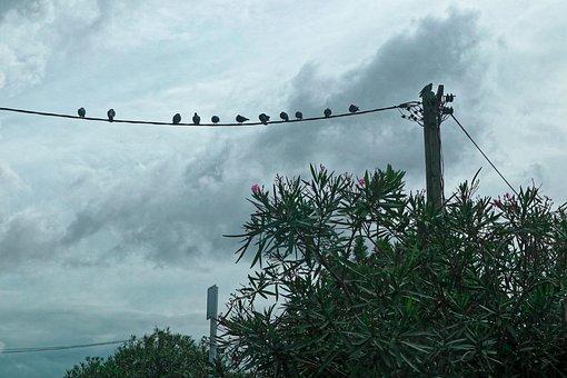 Sky, Nature, Outdoors, Birds, Wildlife, Wild, Tree