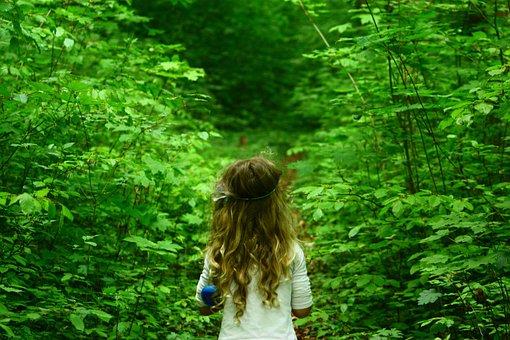 Wood, Nature, Leaf, Tree, Summer, Schönwetter, Color