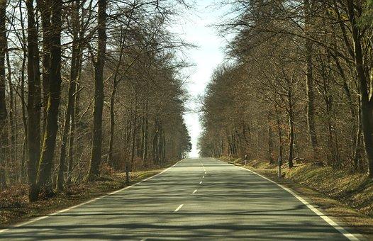Road, Cold Season, Tree, Wood, Nature, Wildwechsel