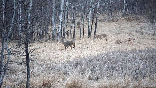 Nature, Wood, Tree, Outdoors, Winter, Deer, Wildlife