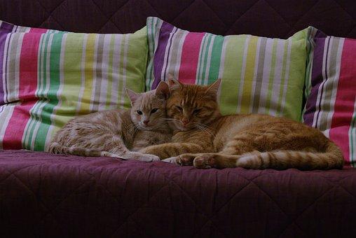 Cat, Kitten, Cute, Pet, Animals, Nap
