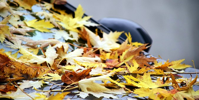 Background, Leaves, Autumn, Leaves On Car, Parked Car