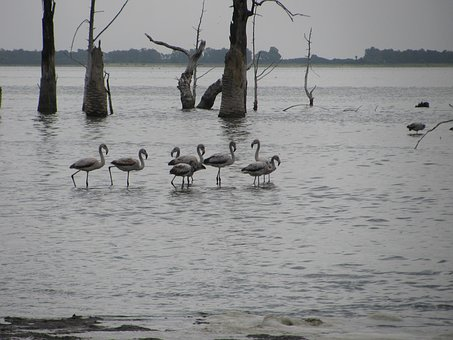 Flemish, Laguna, Birds, Miramar, Fauna